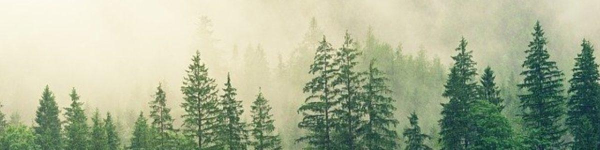 Esej: Służba Leśna